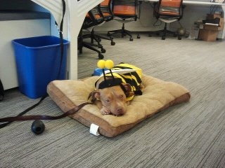 Calvin bumble bee